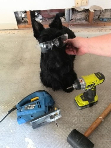 Stevie the tradie!