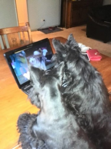 Mavis and Brodie watching Scottie Knopa win Best in Show at Crufts live 2015
