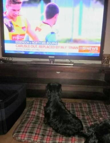 Mavis always watching