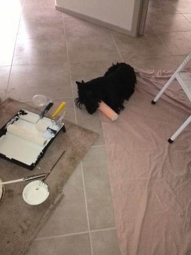 Stevie isn't much help renovating