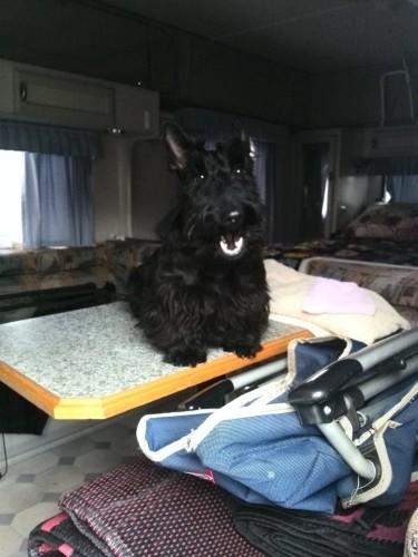 Sassie loves going away in the caravan!