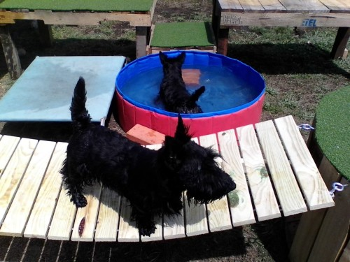 Sassie and brother Barry in the pool