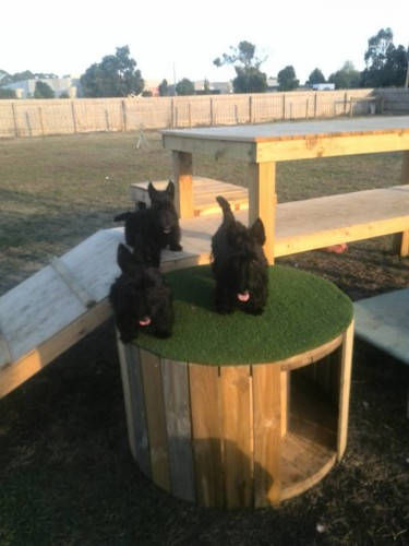 Loving their playground
