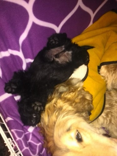 Baby Barry asleep on Linc
